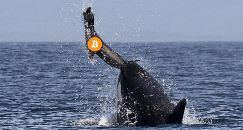 BTC whale