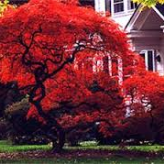 Red  Maple House