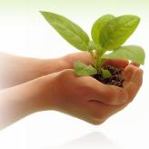 Clean  Bio Energy