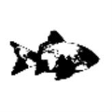 FindFish